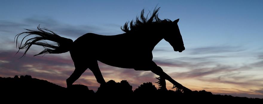 cavalos mais caros do Brasil