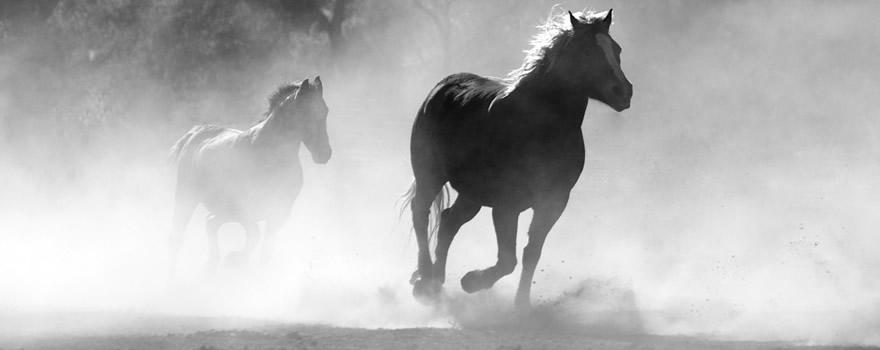 indicações de filmes sobre cavalos