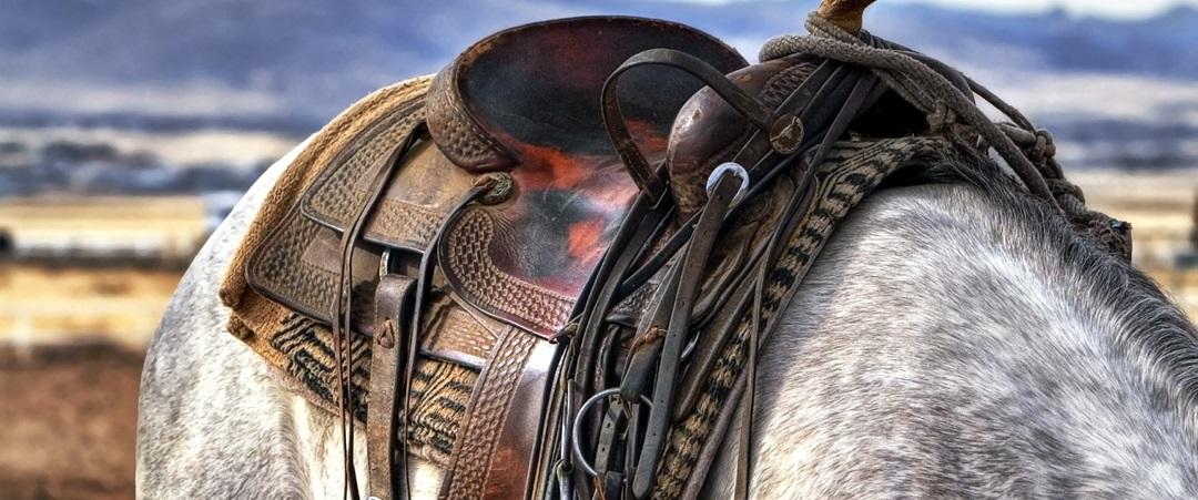 Modelos de sela para cavalos