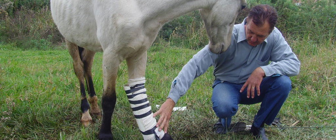 veterinários animais do campo
