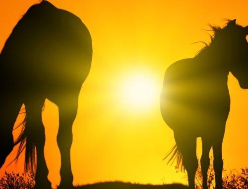Nomes para cavalos