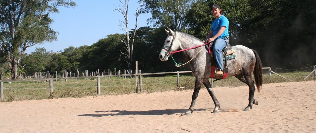 Conheça o papel da equitação