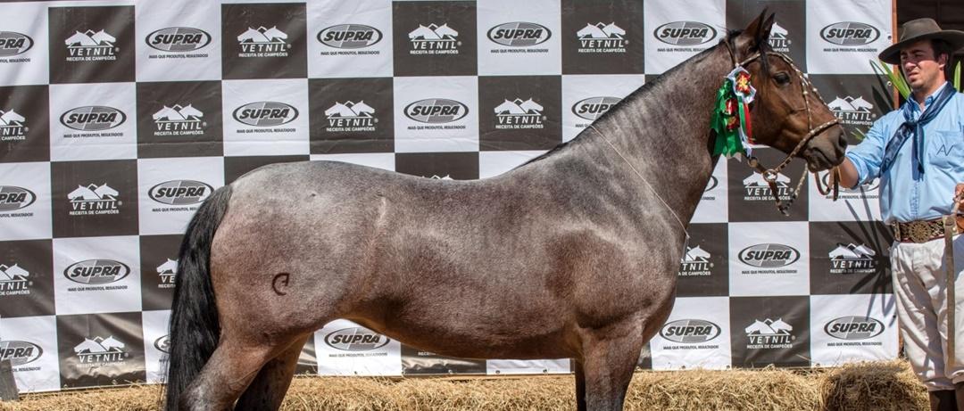 O mercado bilionário de cavalos