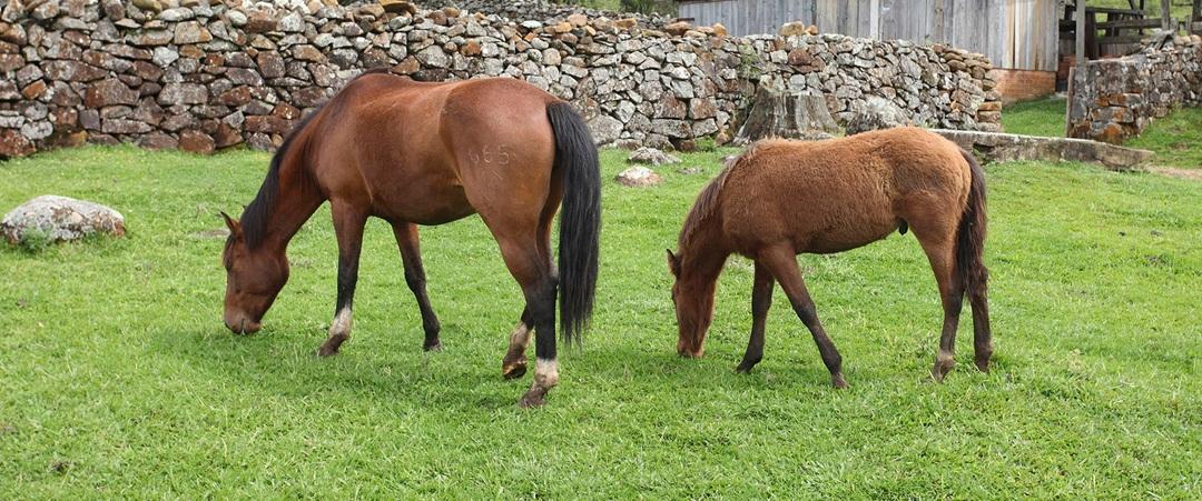 Saiba mais detalhes sobre a tosa de cavalos