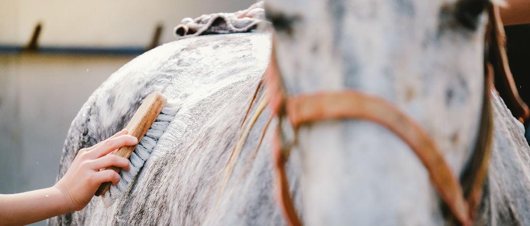 dicas para cuidar da pelagem dos cavalos