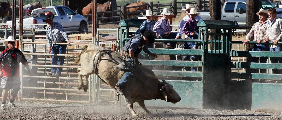 touros de rodeio
