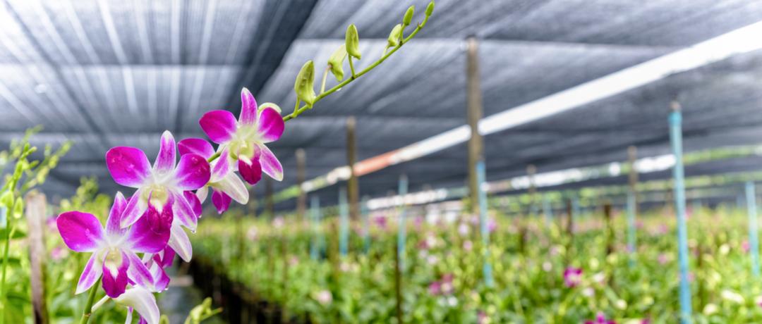Guia de cultivo de flores