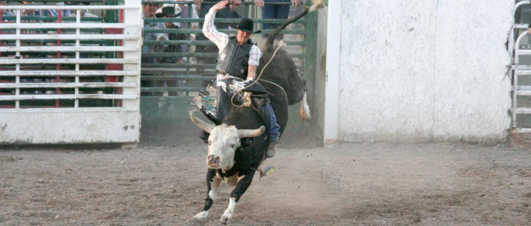 Equipamentos para montaria em touro