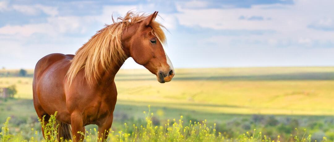 Como cuidar de Cavalos