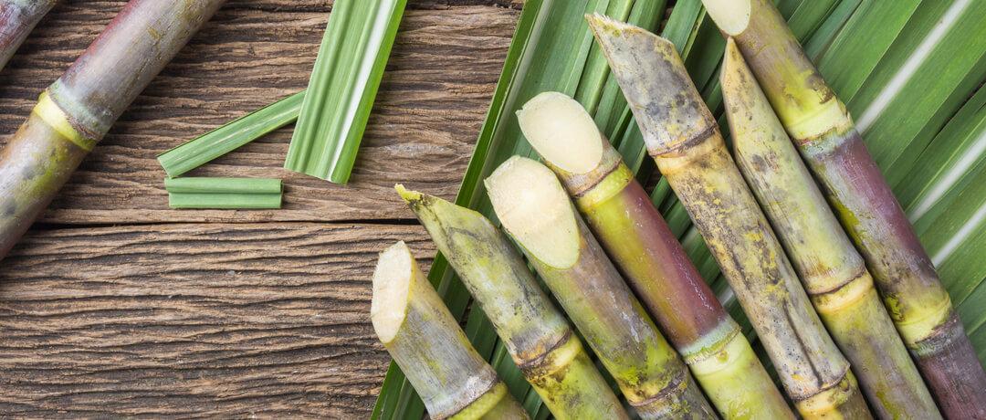 Plantio de Cana de Açúcar