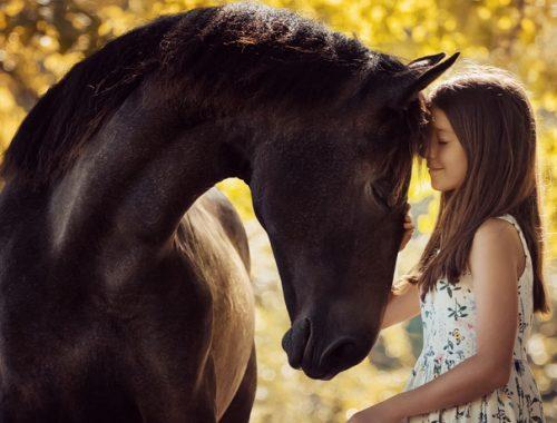 Comportamento dos cavalos