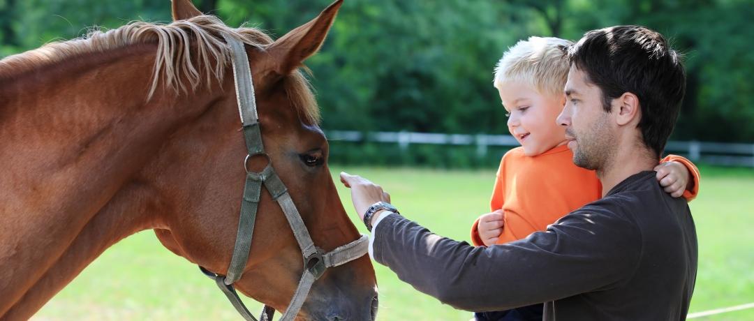 Sons de Cavalos