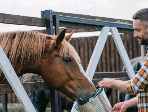 Alimentação dos cavalos