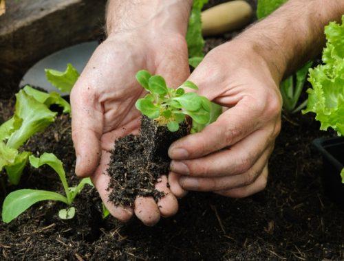 Como fazer Horta em casa