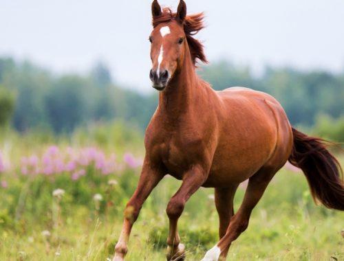 Crescimento de Cavalo