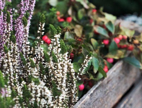 Cuidar de Plantas no Inverno