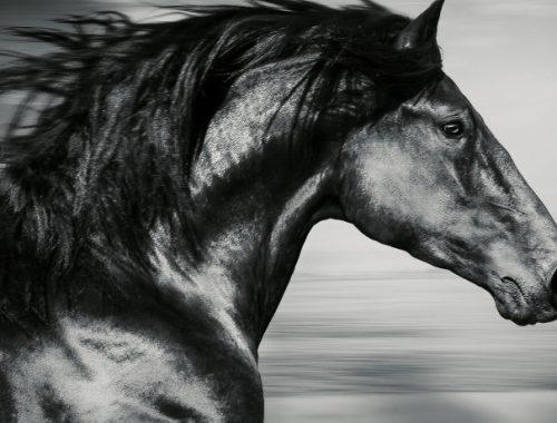 Filmes de Cavalos