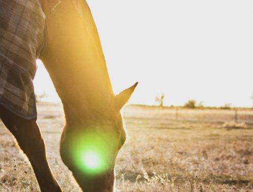 Manta para Cavalo