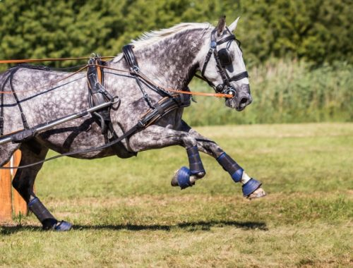 Como treinar um cavalo