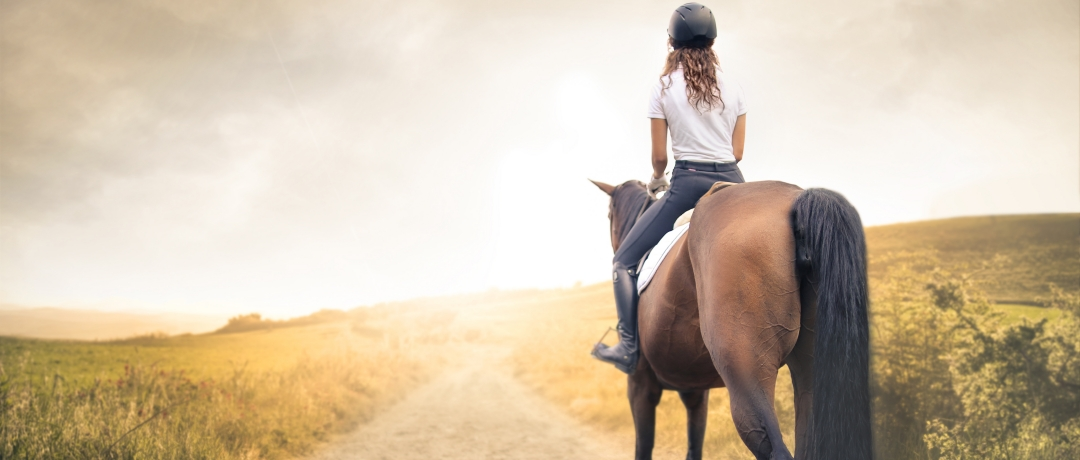 Cloche para Cavalo