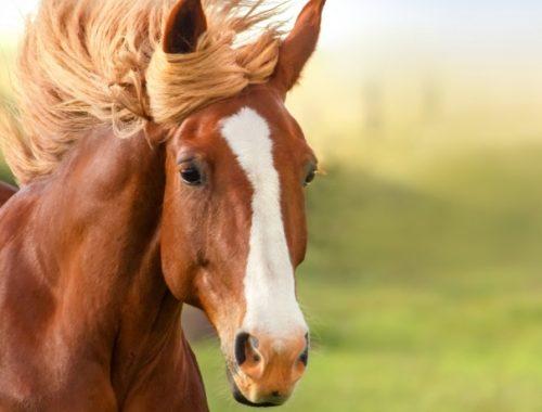 Pelagem de Cavalos