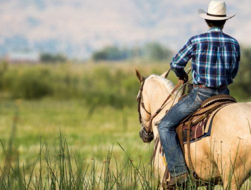 Cavalo de Cavalgada