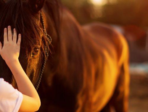 Cavalo para Criança