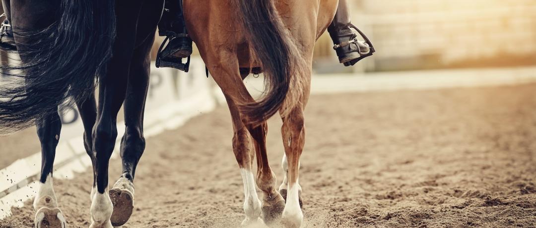 Selar Cavalo