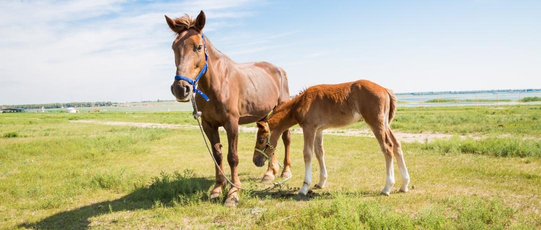 Úlceras em Cavalos