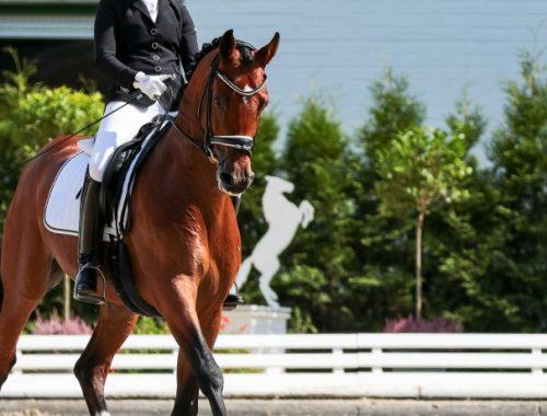Adestrameto de Cavalos
