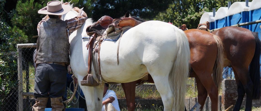Cavalo Chileno