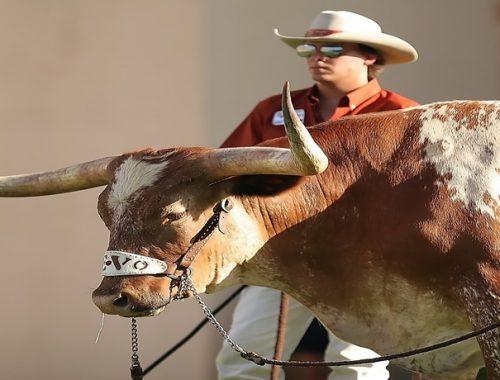Cultura do Texas